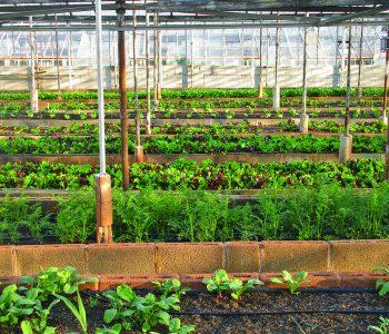 greenhouse-3247181_960_720-350x300