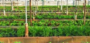greenhouse-3247181_960_720-730x350-1-300x144